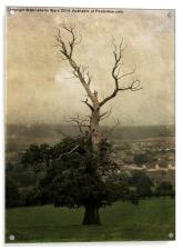 The Skeletal Tree, Acrylic Print