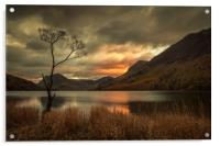 Lone Tree - Buttermere, Acrylic Print