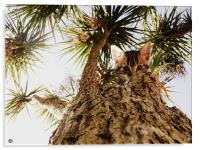 Kitty in a palm tree, Acrylic Print
