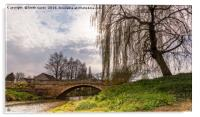 Weeping Willow, Acrylic Print