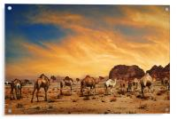 Camels in Wadi Rum, Acrylic Print