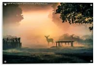 Deers In The Mist, Acrylic Print