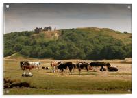 Cows grazing under Pennard Castle, Acrylic Print