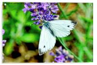 The small white butterfly, Acrylic Print