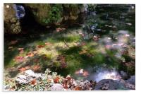 rays and leaves on water, Acrylic Print
