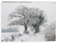 Oak Trees in Winter Snow, Acrylic Print