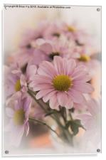 Chrysanthermums in vase, Acrylic Print