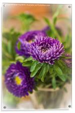Aster in a vase, Acrylic Print