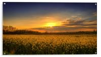Sunset over the Yellow Fields, Acrylic Print