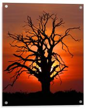 Sunset Tree, Acrylic Print