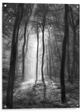 The light and shadows of the forest, Acrylic Print