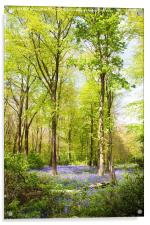 Bluebell Woods in Spring, Acrylic Print