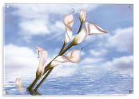 Callas In Water, Acrylic Print