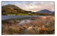 """Evening Light across Loweswater""Picasa, Acrylic Print"