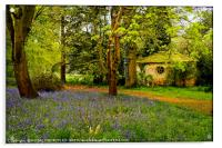 """""""Little Arbour  in the Bluebell wood"""", Acrylic Print"""