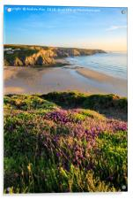 Heather at Porthtowan, Acrylic Print