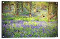 Painted Bluebell Wooded Carpet, Acrylic Print