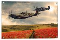 Spitfire over poppiefield, Acrylic Print