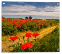 Pathway to the Poppies, Acrylic Print