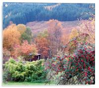 Shelter in the Autumn colours. , Acrylic Print