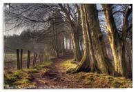HDR of Trees in Ousbrough Wood, Acrylic Print