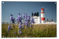 Bluebells at Souter Lighthouse , Acrylic Print