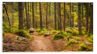 Forest Path in autumn , Acrylic Print