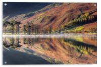 The Buttermere Pines, Acrylic Print