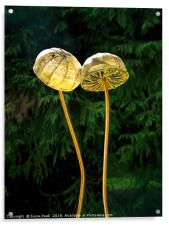 Two Little Shrooms, Acrylic Print