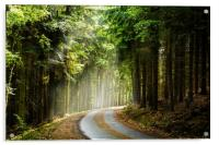 Czech forest in the day sunlight rays., Acrylic Print