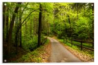 Rural road in summer forest., Acrylic Print