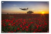 Spitfire over a field of poppies., Acrylic Print