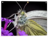 The Eye of the Green-Veined Butterfly, Acrylic Print