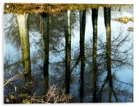 Reflections - Trees in the River Wensum Norfolk, Acrylic Print