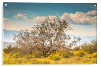 Tree Of Life Joshua Tree 7299, Acrylic Print