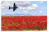Lancaster bomber passing over a field of poppies, Acrylic Print