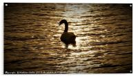 Lovely Silhouette of a Swan                , Acrylic Print