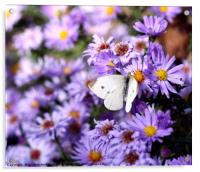 butterfly on flower nature background , Acrylic Print