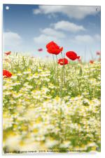 chamomile and poppy flower meadow, Acrylic Print