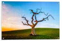 Lonely Tree At Sunset, Acrylic Print