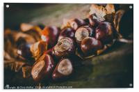 Conkers on a log, Acrylic Print