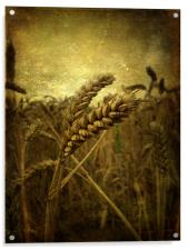 Wheat Field, Acrylic Print