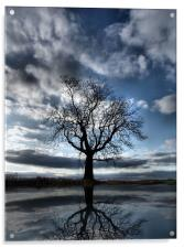 Wintering Oak Tree, Acrylic Print