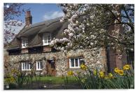 Thatched house with blossom, Acrylic Print