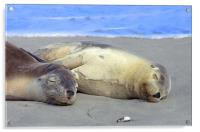 Another Day at the Beach! , Acrylic Print