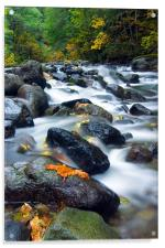 Flow of Autumn, Acrylic Print