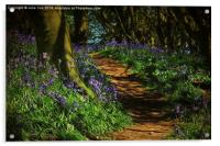 Bunkers Hill Bluebells, Acrylic Print