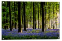 Micheldever Bluebells revised, Acrylic Print