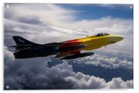 Miss Demeanour in flight, Acrylic Print