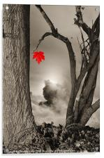 Colour Me Red, Acrylic Print
